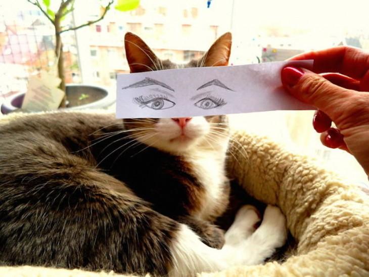 gato multicolor con ojos dibujado en un papel