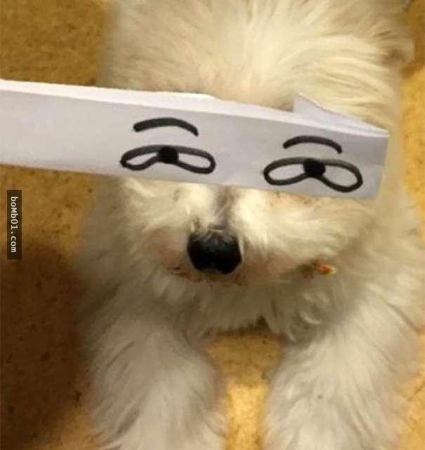 perro blanco con ojos dibujado