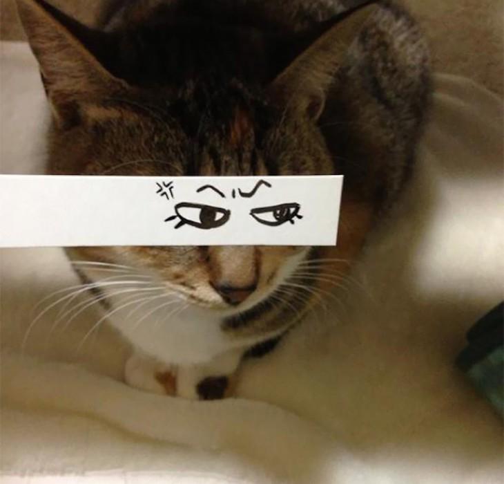 gato multicolor con ojos dibujados