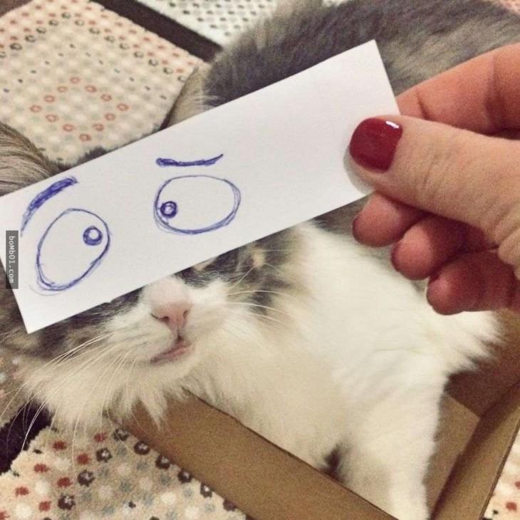 gato blanco y gris con ojos de sorpresa dibujado