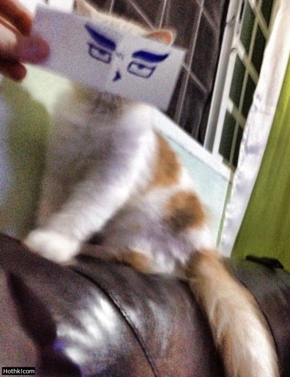 gato blanco y pardo