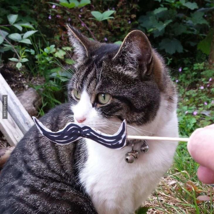 gato blanco y atigrado con bigotes dibujados