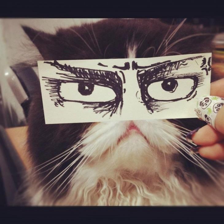 gato blanco y negro con ojos dibujados