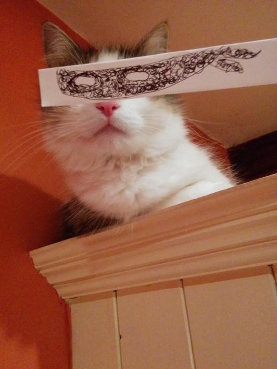 gato con ojos de El Zorro