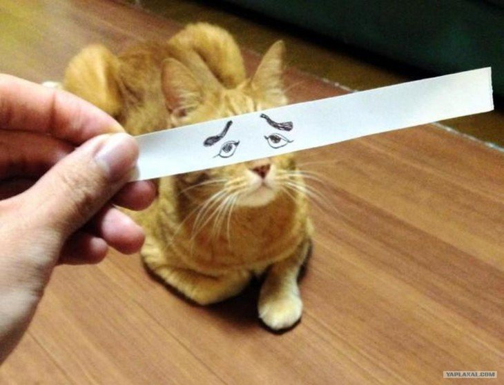 gato pardo con ojos de interés dibujado