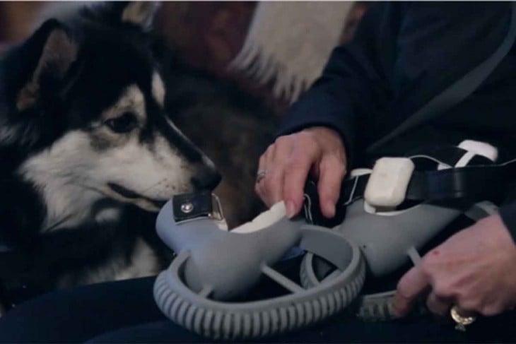 protasta 3d con perro husky