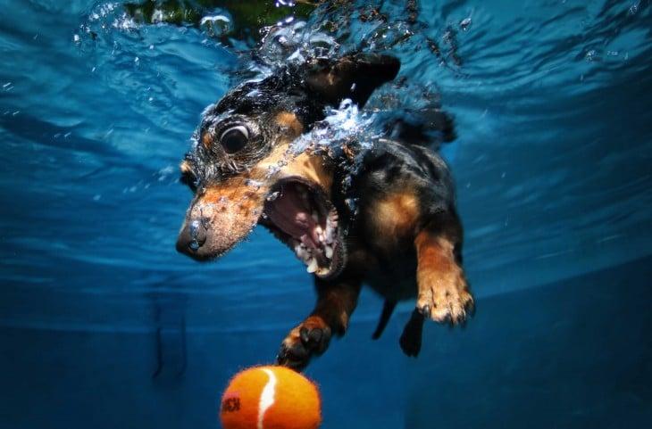 perro daschund debajo del agua con pelota