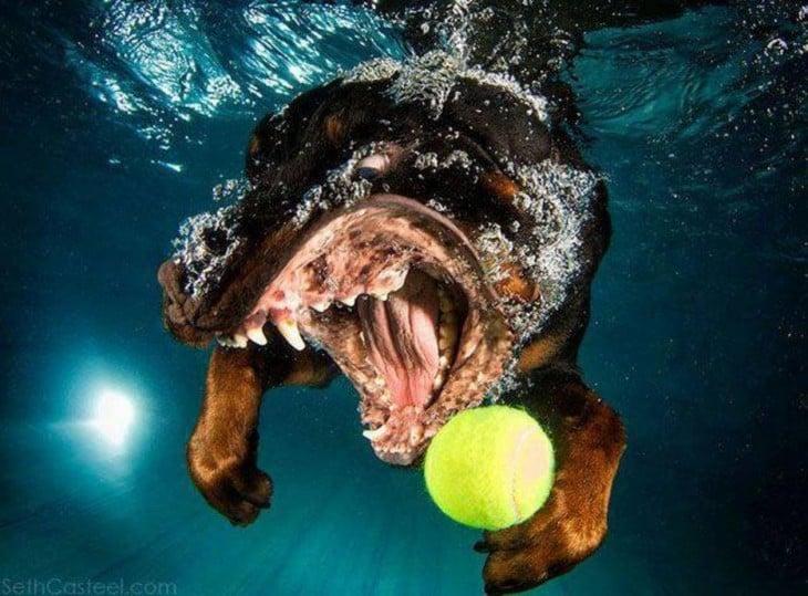 rottwailer debajo del agua con pelota