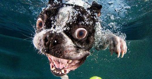 perros debajo del agua