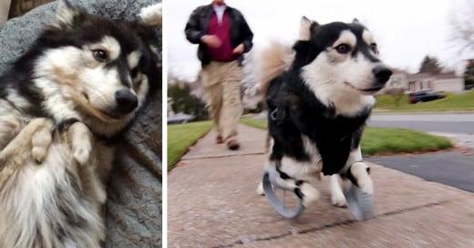 como la tecnologia 3d no le permite a los perros caminar o correr