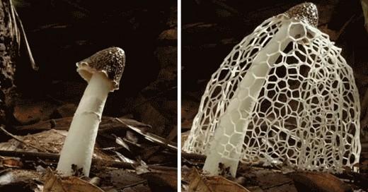 como crecen los hongos