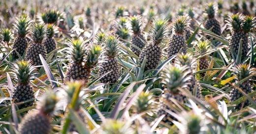 como crecen las frutas vegetales y especies