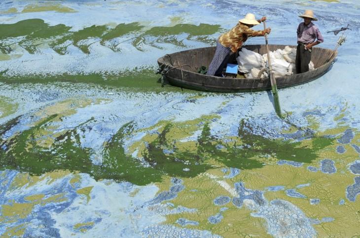 Pescadores navegan en un lago plagado de algas en la provincia de Anhui China