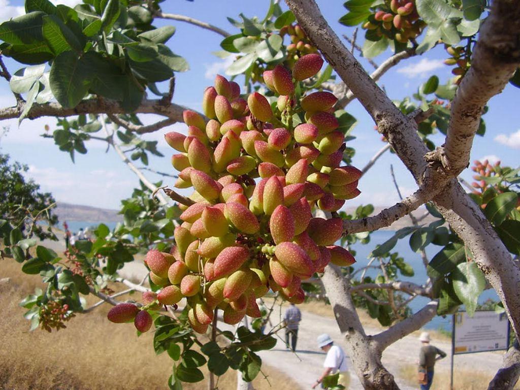 Como crecen frutas verduras y especies en la tierra for Lista de arboles perennes