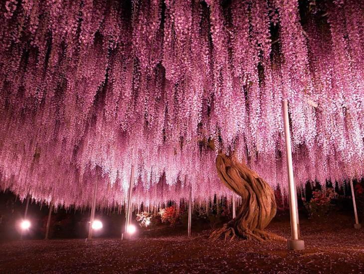 Árbol en color Rosa ubicado en Japón