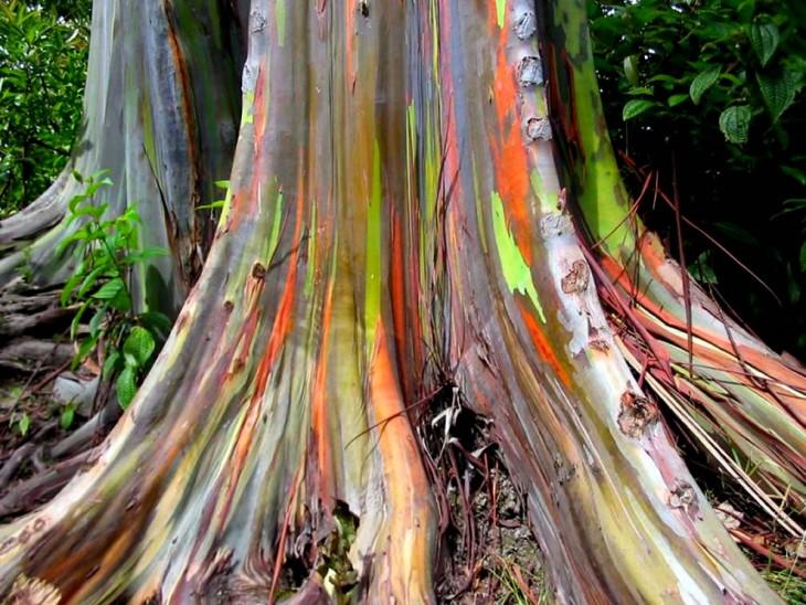 raíz y base de un árbol con colores