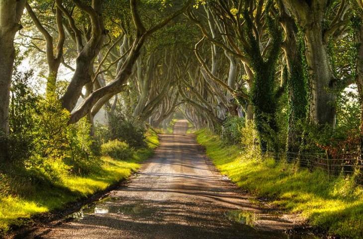 árboles Dark Heges en Irlanda de día