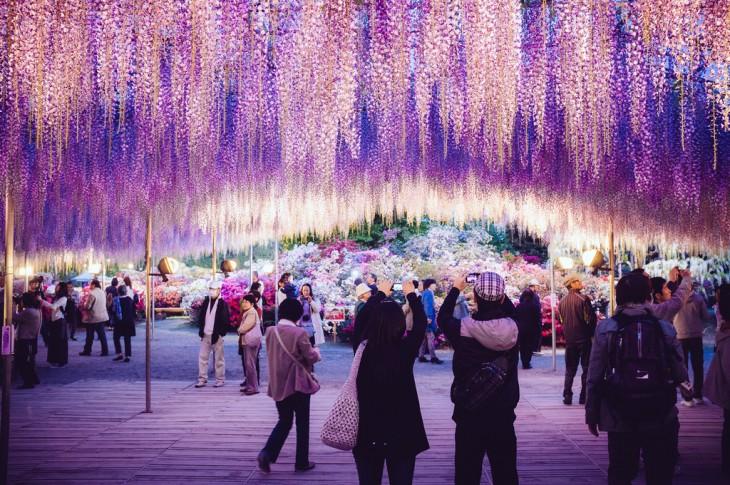 Personas debajo de las ramas de un árbol ubicado en un parque de Japón