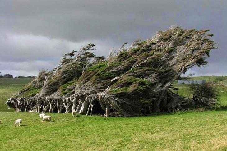 árboles inclinados hacia un costado en el centro de un área verde