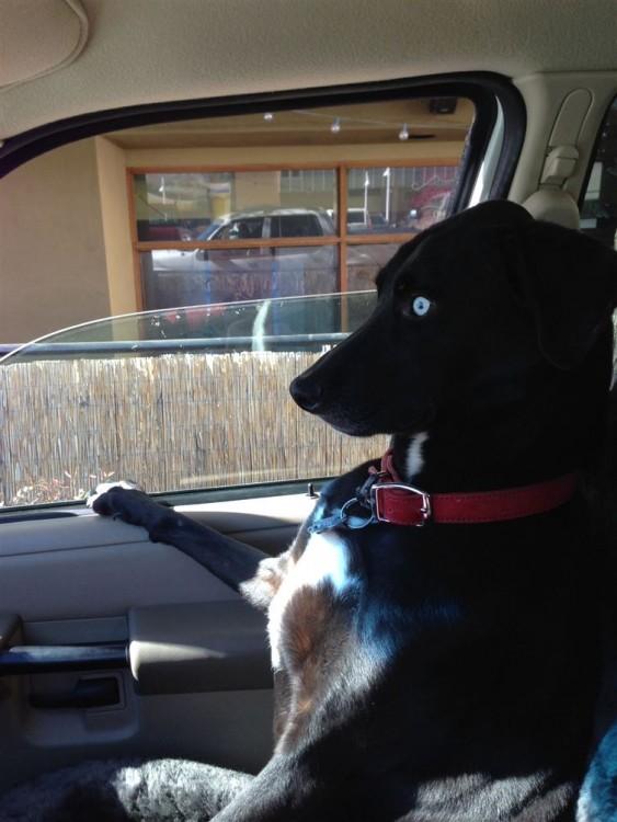 perro negro sentado en el asiento del copiloto