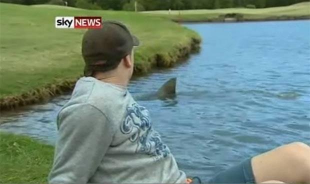 tiburon en el estanque de un campo de golf