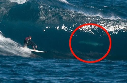 tiburones surfeando con personas