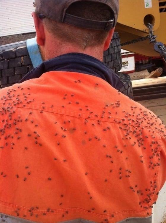 moscas en la espalda de una persona