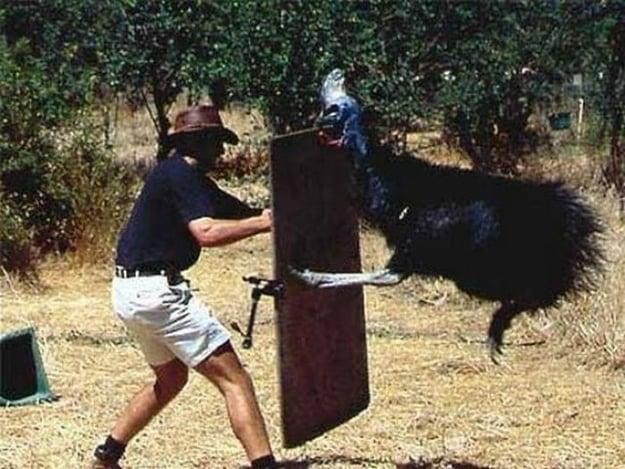 ave gigante australiana pateando a un hombre