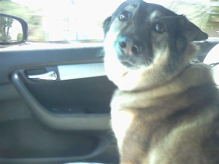 perro con cara de compasion sentado en el coche