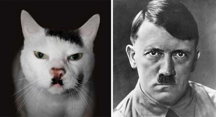 Gato que se parece a Hitler, Kitler