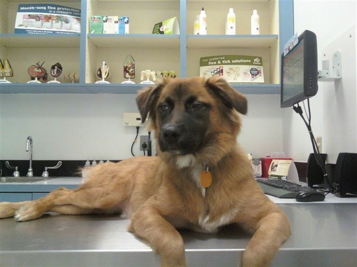 perro aburrido esperando acostado en la plancha de una veterinaria