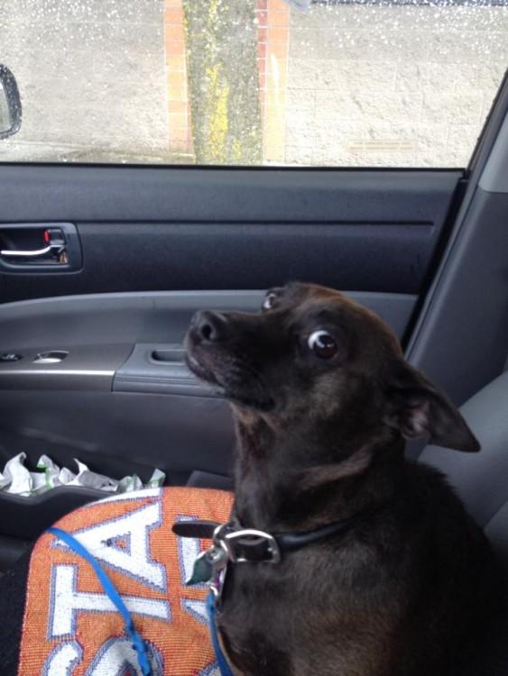 perro de color negro con ojos de asustado