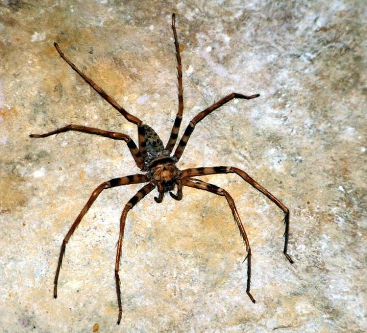 imagen cerca de una araña gigante sobre una piedra