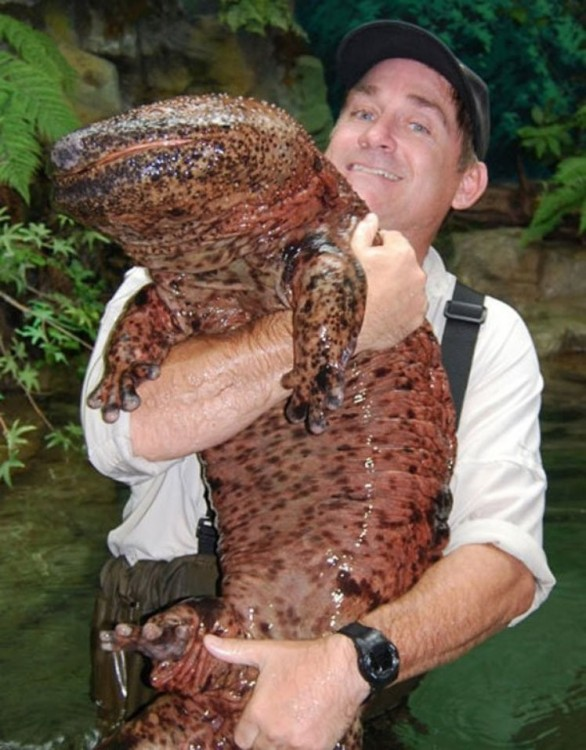Hombre cargando una salamandra gigante encontrada en un lago de China
