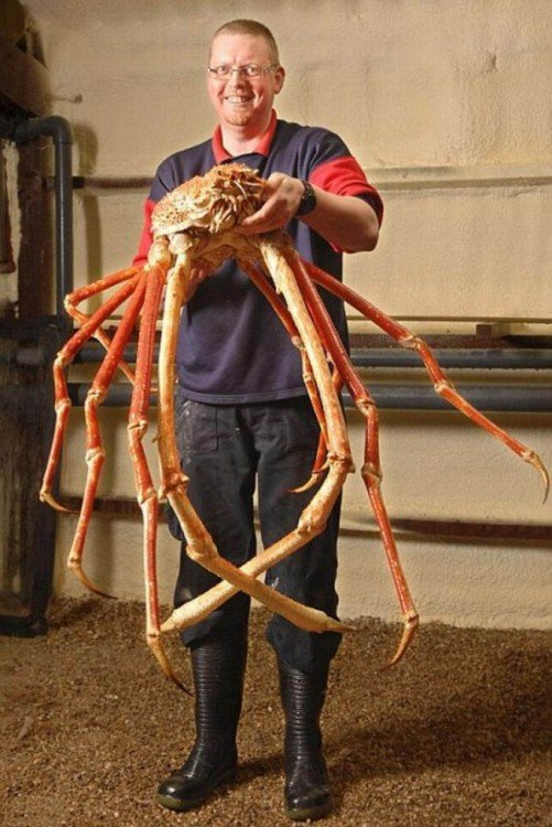 Una persona cargando en sus manos a un cangrejo gigante