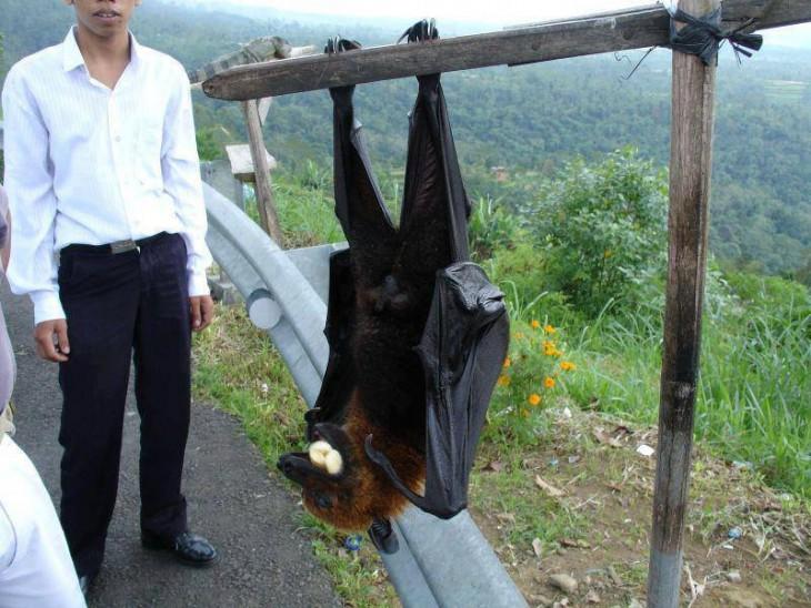 Imagen de un chico que esta a un costado de un murciélago enorme colgado de un palo de madera