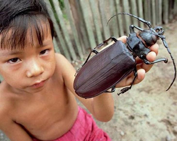 Niño sosteniendo en su mano un escarabajo enorme