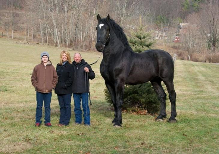Fotografía de tres personas a lado de un caballo percherón enorme en color negro