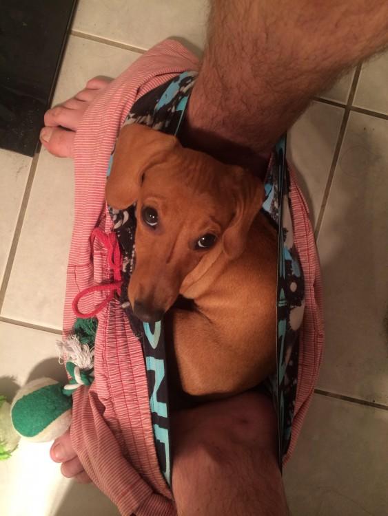 Perro entre las piernas de su amo mientras hace del baño