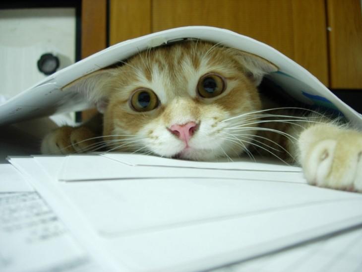Gato asomado debajo de unos cuadernos
