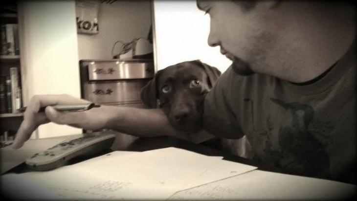 Perro con mirada triste recargado en el brazo de su amo