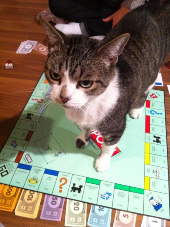 Gato arriba de un juego de mesa de Monopoly