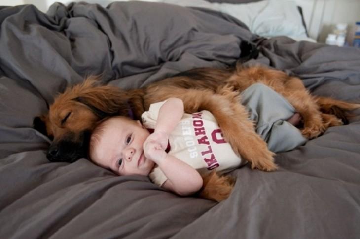 Perro cocker abrazando a un bebé
