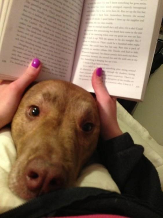 Perro con la cabeza metida entre un libro