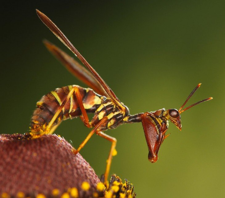 Mantis sobre una planta que parece ser una avispa