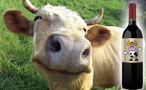 Cabeza de una vaca con una botella de vino a un lado