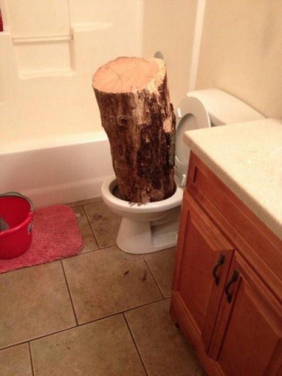 Tronco grueso en un inodoro