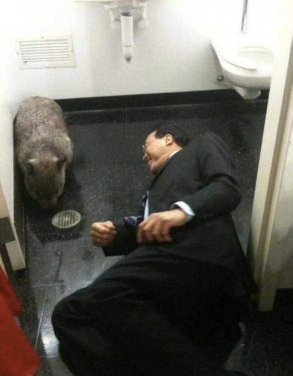 japones acostado en un baño público juega con un animal