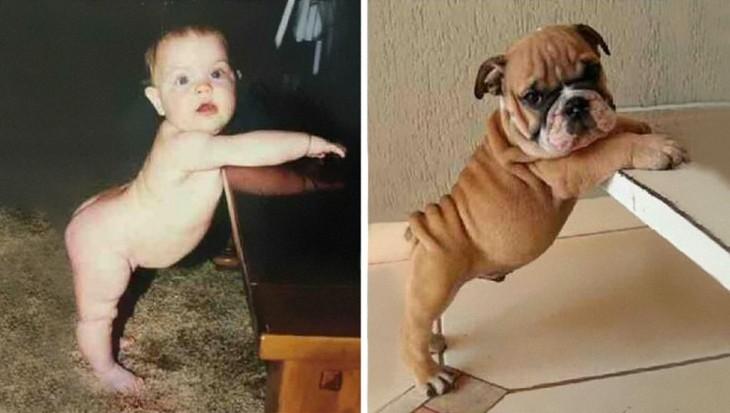 imagen dividida en dos en una un niño y en la otra un perro los dos en la misma pose