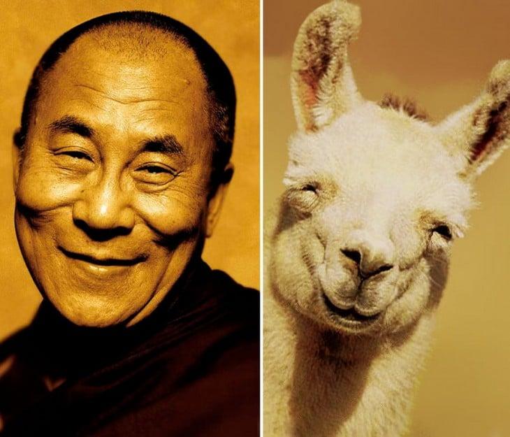 Dalai lama parecido a una llama que esta sonriendo